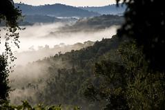 Mist (Marie-Marthe Gagnon) Tags: africa morning mist fog rwanda famine flickrchallengegroup flickrchallengewinner mariegagnon mariemarthegagnon