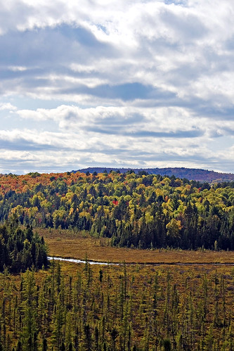 Algonquin Park offers hundreds of acres of pristine wilderness (photo by Craig Moy).