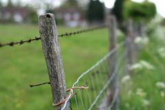 countryside ... (_nejire_) Tags: england green canon fence countryside kent wire dof bokeh explore barbedwire f22 carlzeiss 820pm 10faves 25faves nejire 400d eos400d canoneos400d fave10 planart50mm pluckly mhashi fave25 carlzeissplanart1450ze 7215353g8am