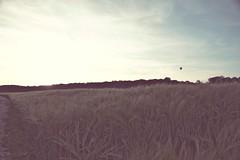 Auf und Davon (Wellenpriester) Tags: sunset ballon feld lomofake ulm
