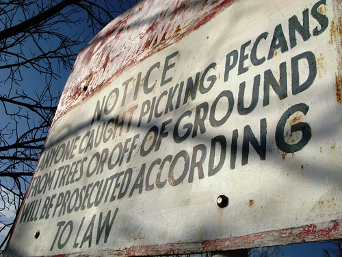 Poaching Pecan Pickers will be Prosecuted Profusely in Profound Practices of Pious Poetry near Fabens, Texas, USA