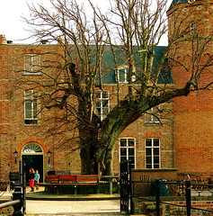 CASTLE WESTHOVE: OLD LIME TREE (Akbar Simonse) Tags: holland netherlands thenetherlands zeeland lime lindentree oostkapelle westhove infinestyle theperfectphotographer iamflickr 200000000stagelovers akbarsimonse westhovecastle