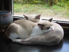 2 sleeping