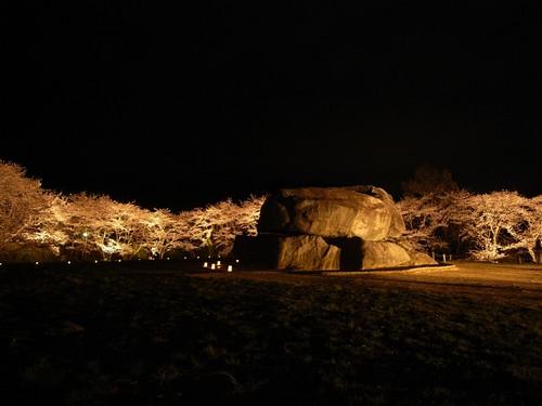 石舞台古墳(夜桜)-04