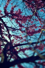 lil' fella (Dimitris Ladopoulos) Tags: flowers blue sky sun tree spring purple wind shift athens bee greece tilt dimitris ladopoulos