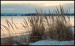 Twilight grasses (Thatsanotherdory) Tags: winter sunset beach flora novascotia dusk shoreline scenic valley annapolis backlighting artedellafoto