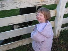 I like cows