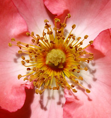 An Insect Would Love This Place (jhhwild) Tags: flower love insect this place center an would