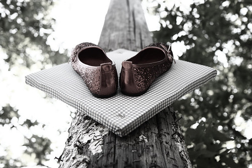 Shoes Up A Tree 6767