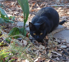 hunter (jennbennstar) Tags: our kitty beloved