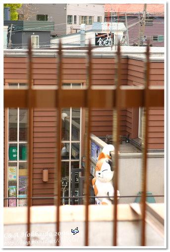 Hokkaido_0960