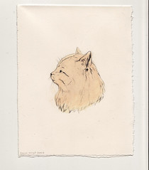 Tabby (Sarah McNeil) Tags: art animal illustration pencil cat paper paint drawing tabby exhibition
