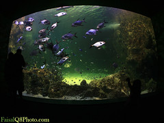 Aquarium Screen ... (FaisaL HamadaH) Tags: work canon aquarium center screen canon5d kuwait  fa faisal q8 voluntary kwt  canoneos5d  faisalhamadah  canonef15mm28fisheye aquariumscreen
