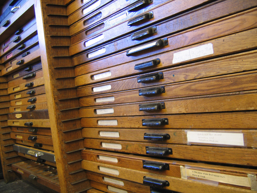 drawers of type