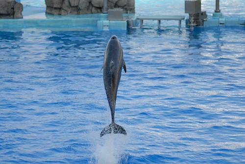 20080724 Aquarium 26