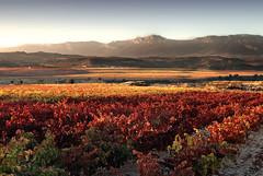 Vias (La Rioja - North Spain) (oo Felix oo) Tags: travel viaje spain nikon autum wine otoo turismo logroo larioja vias d80 felmar73 vinyers