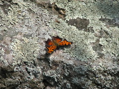 Butterfly un-camouflaged