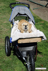 Guido's Buggy