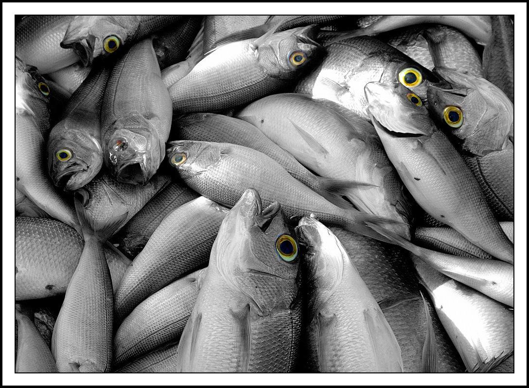 Fish_Tale