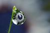 plasma dewdrop (Lord V) Tags: flower macro water beautiful dewdrop refraction