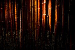 red brown bamboo