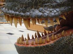 Teeth! (steve260589) Tags: uk england model dinosaur unitedkingdom teeth oxford oxforduniversity oxforduniversitymuseumofnaturalhistory oumnh dinosaurmodel