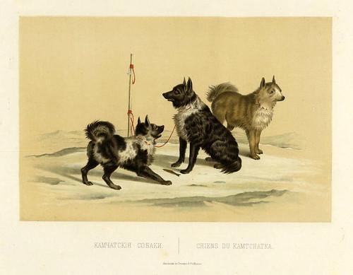 Perros de Kamtchatka