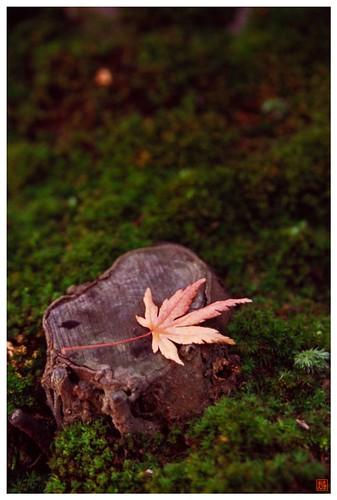 Moss & Leaf  081209 #03