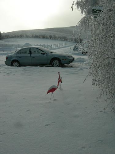 snowbirds2