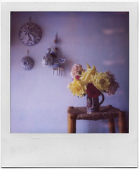 .sweet home. (andrenzo) Tags: old red roses love film home rose yellow composition vintage polaroid sx70 photography photo sweet dream violet dreams intro 70 pola sx pellicola 779 istantanea introcoso andrenzo andreacolombo introvertevent colomboandrea