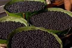 Batches of Acai Berries (itwellness) Tags: brazil food plant black nature fruit healthy berry amazon rainforest raw berries basket branches tasty frond exotic snack tropical bunch tropic brazilian merchandise organic agriculture bundle botany product textured ingredient harvesting acai energetic nutrient acai