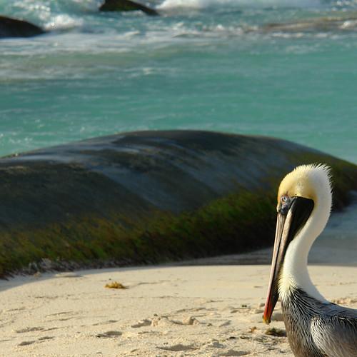 oceanbird.jpg