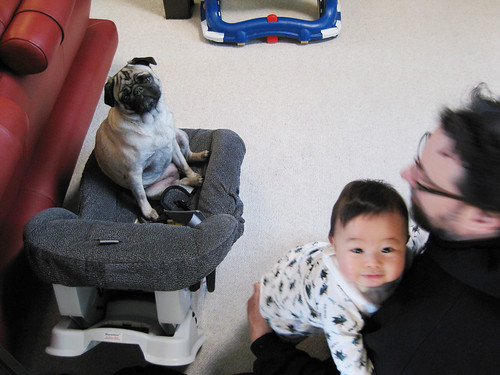 Car Seat Dog Bed