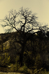 On our hike the day after christmas (jessbercovici) Tags: yellow sad treeofdeath