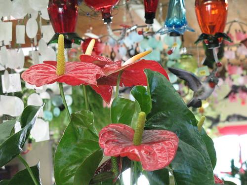 exotic indoor flowering plant