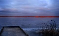 de rode overkant (Sophie Teunissen) Tags: wood red lake holland ice water netherlands frozen meer bevroren horizon nederland riet hout gooimeer ijs rode stijger