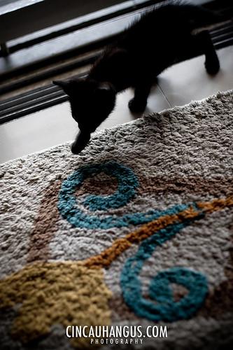 4° Cat 001 - IMG_6040.jpg