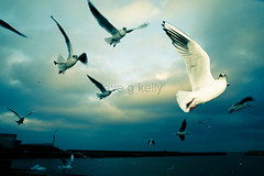 The Art Of Flying (Dave G Kelly) Tags: ireland sky naturaleza seagulls bird nature birds animal animals port canon fly flying interestingness wings crossprocessed gaivotas harbour seagull natureza flash flight himmel natura aves cu ali uccelli volo explore ciel porto ave alas 5d animales canon5d vol animaux hafen mwe wicklow animais gaviotas gaviota oiseau mwen animali animale gabbiani gabbiano mouette oiseaux strobe irlanda gaivota strobo vuelo ailes volando volare volar mouettes battenti voler sigma2470mmf28exdg battant i500 estroboscpico stroboscopique davegkelly