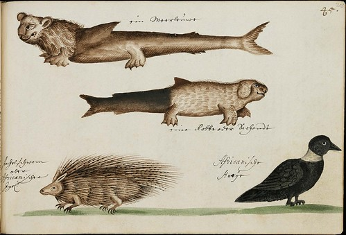 eccentric dog-fish, porcupine & black bird