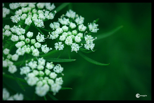 macro hoa ?!?