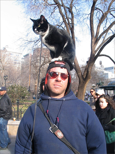 Man with Cat on His Head, Union Square