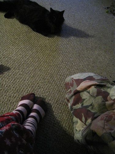 35/365: Socks, Cat & Blanket...