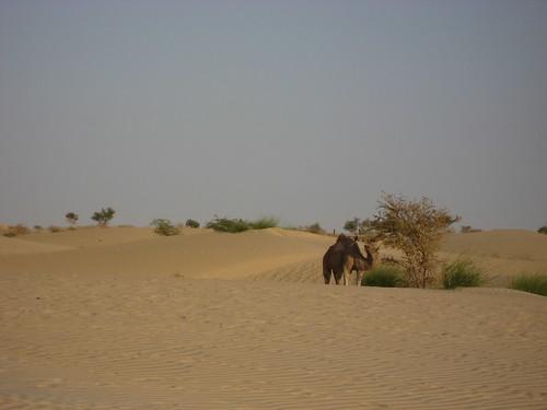 """Desert """"Wild""""life"""