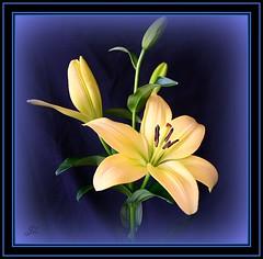 Beige flowers (bonksie61) Tags: flowers beige smörgåsbord yabbadabbadoo digitalcameraclub supershot avision almostanything peachofashot