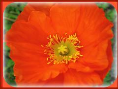 Aprile '08 - A caccia di fiori e colori - 1