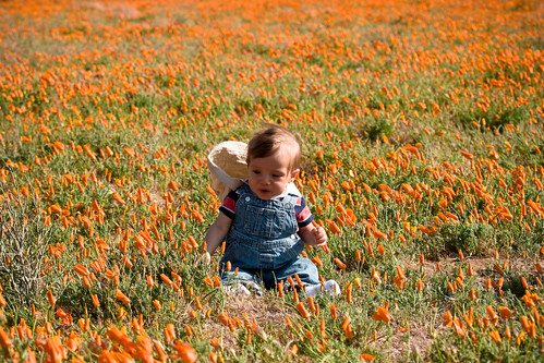 Elijah at the Poppy Preserve