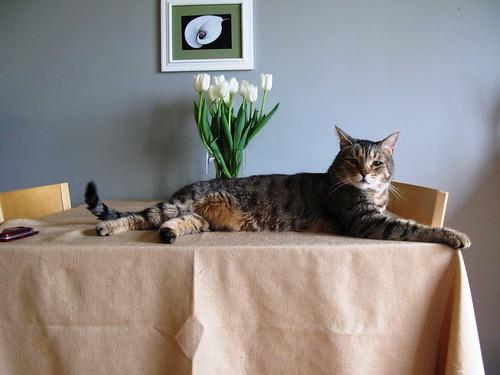 korben_likes_tablecloths