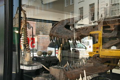 Hi! I'm Stan the T Rex (John.P.) Tags: uk reflection london fossil skull dinosaur teeth rex guesswherelondon trex tyrannosaurus pimlicoroad gwl ammonite2000