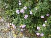 96.11.16竹崎鄉光華村茄苳風景區內的茄苳老樹DSCN3271
