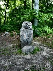 SLEEPY OWL (jacqui 006 (catching up)) Tags: by woods steve sleepy owl iredale chopwell